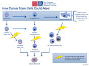Primer on cancer STEM cells – ask your oncologist about plans to address these
