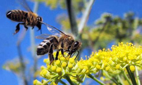 Bees and Electromagnetic Pollution