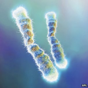 Care and feeding of your Telomeres