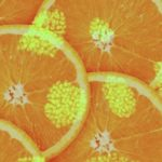 Nutrients to remedy cancer STEM cells